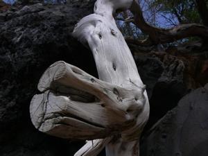 we are all bones